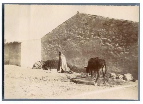 Algérie, Photo d'un homme et ses ânes Vintage citrate print Tirage citr