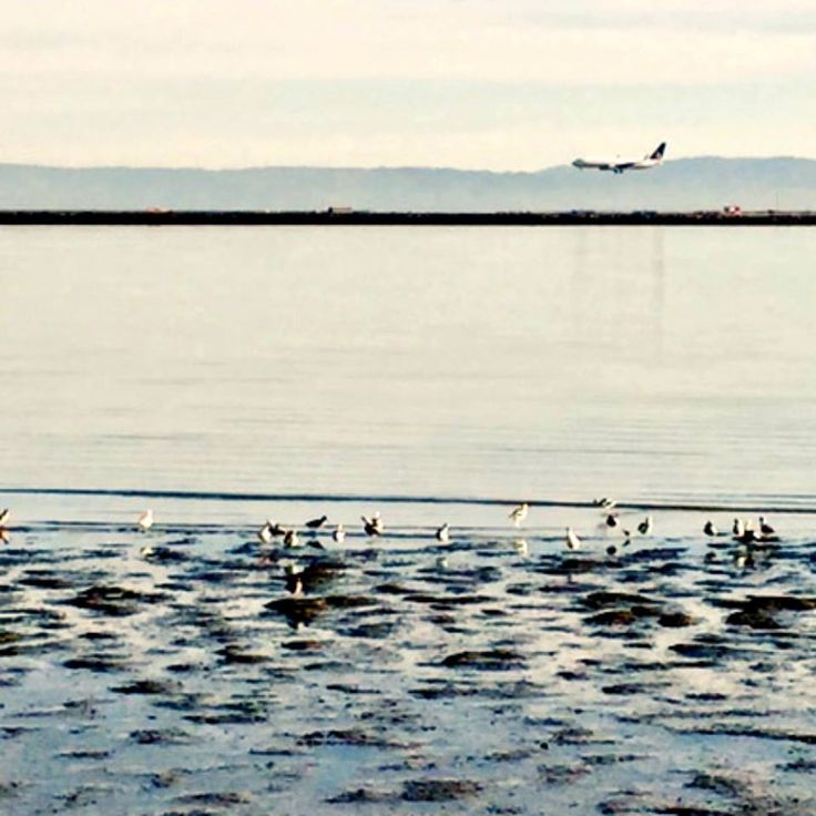 Birdwatching on the bay & not a care in the world.