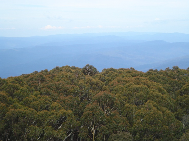 Mt Donna Buang.