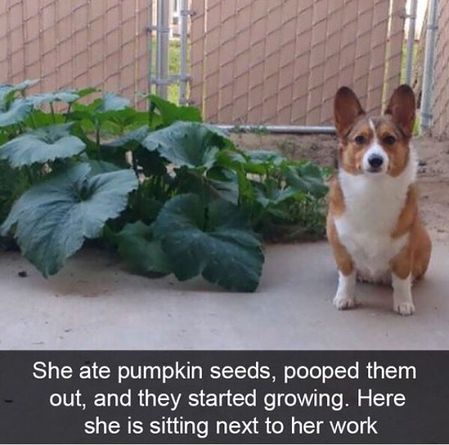 30 Super Funny Pictures Of Animals