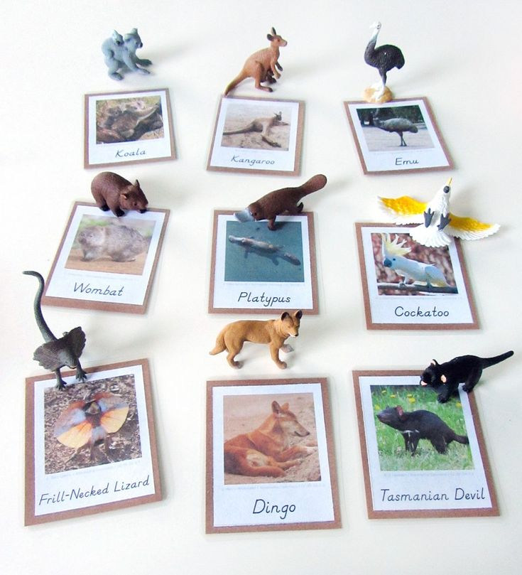 Animals of Australia for the Montessori Wall Map & Quietbook with Printables