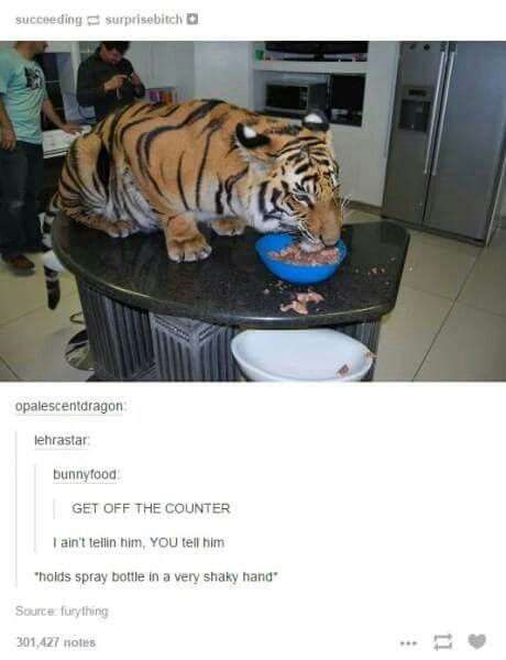 """Get off the counter!"" Tumblr funny"