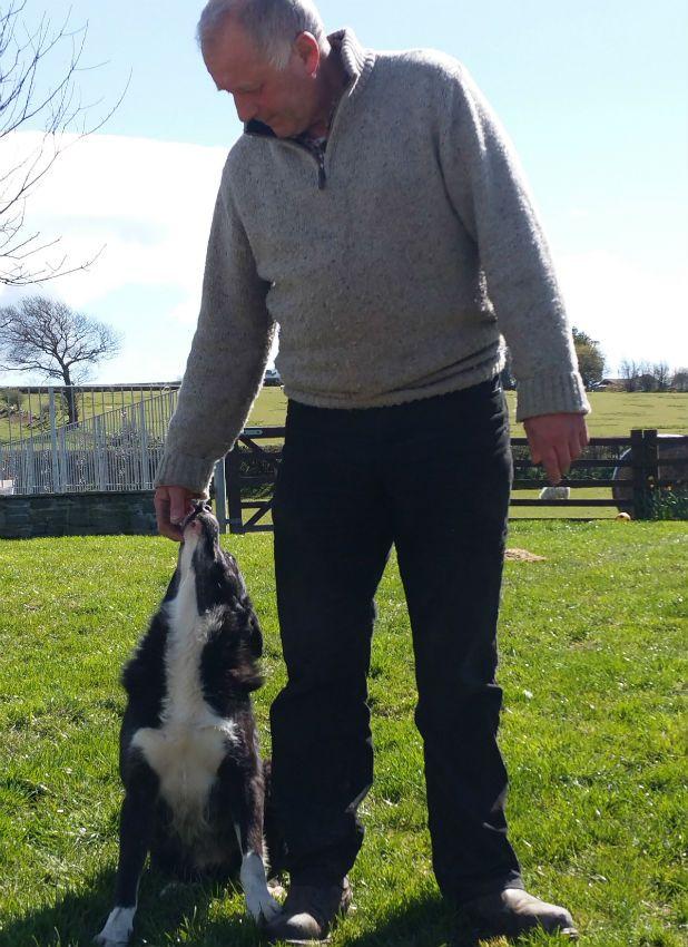 Dog Walks 240 Miles to Go Back Home (6)