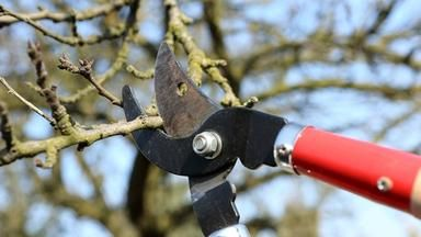 Víte, jak prořezat své ovocné stromky?