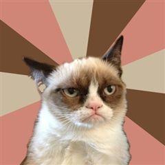 NEW grumpy cat pics | New Grumpy Cat | Meme Generator