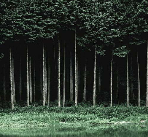 Tumblr Backgrounds Trees