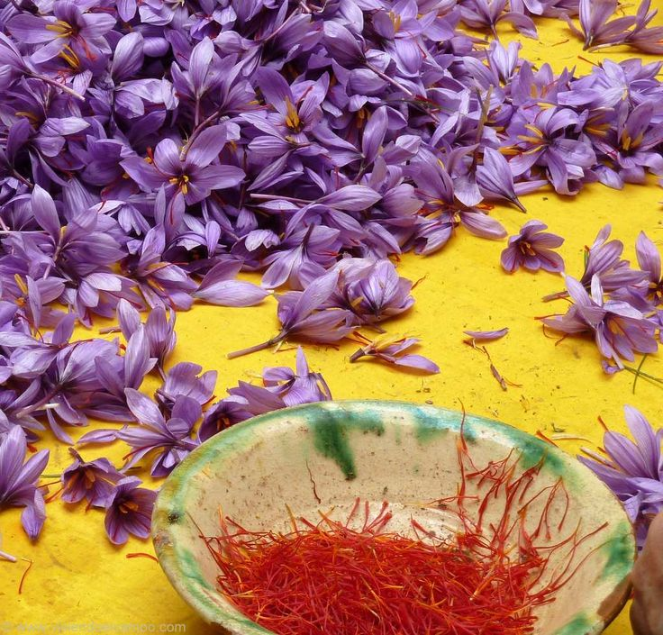 Saffron flower/ flor del azafrán http://www.viviendoelcampo.com/vida-de-campo/en-el-pueblo/la-flor-de-madridejos.html