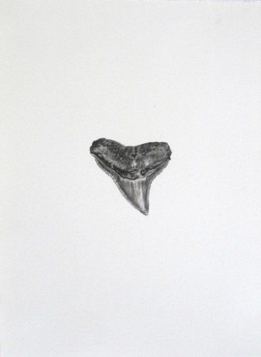 Tooth #1 Tooth #1 photo realistic drawing from vintage photography shark's tooth http://www.finelifeart.com/tooth-1-2/
