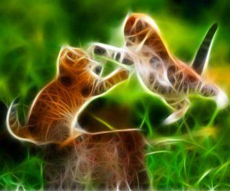181 Best Images About Fractal Cats On Pinterest Cats