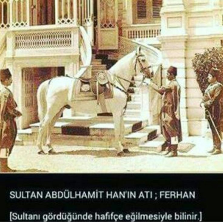 Horse #at#abdülhamit#
