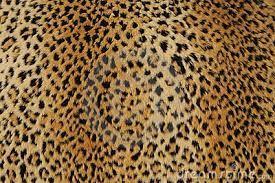 A pelle di leopardo