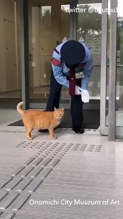 Two cats won't give up on trying to enter a Japanese Art Museum, the war has been going on for 2 yea