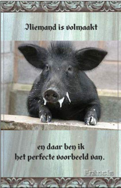 http://fmlkunst.home.xs4all.nl/varkenskaarten1/varkenskaarten1.htm - te koop met envelop voor 1 euro