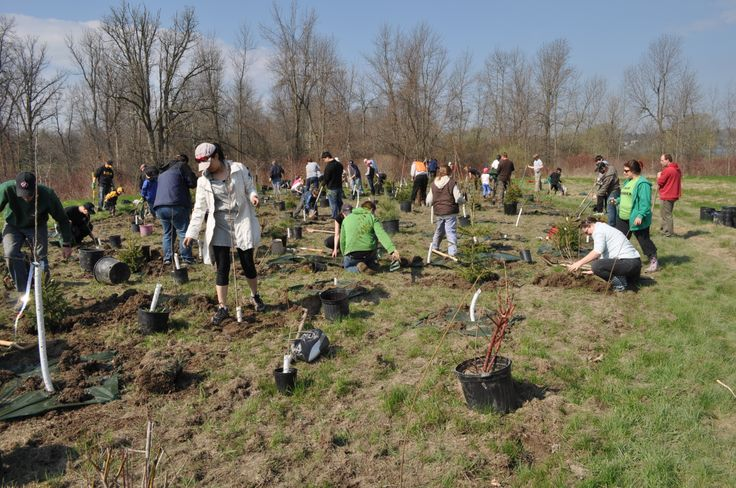 Spring tree planting at Lemoine Point CA