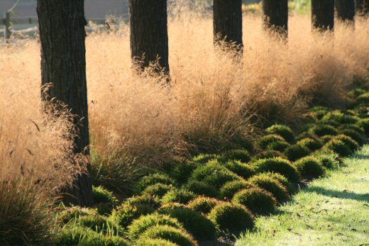 bold, simple planting with trees and ornamental grass; uniformity, rhythm and contrast