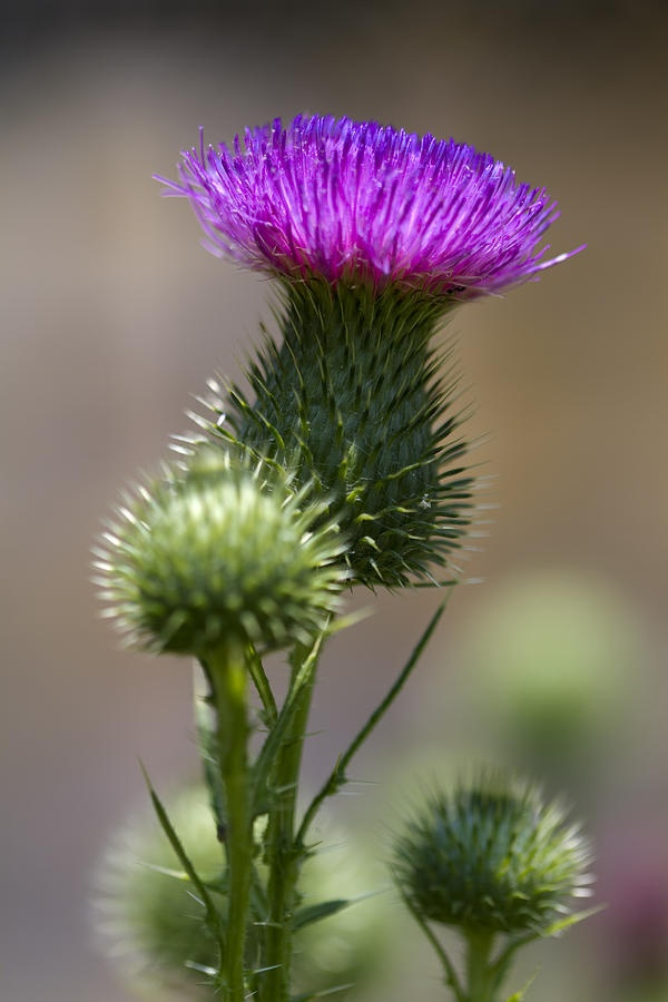 17 Best images about Oklahoma Wildflowers on Pinterest ...