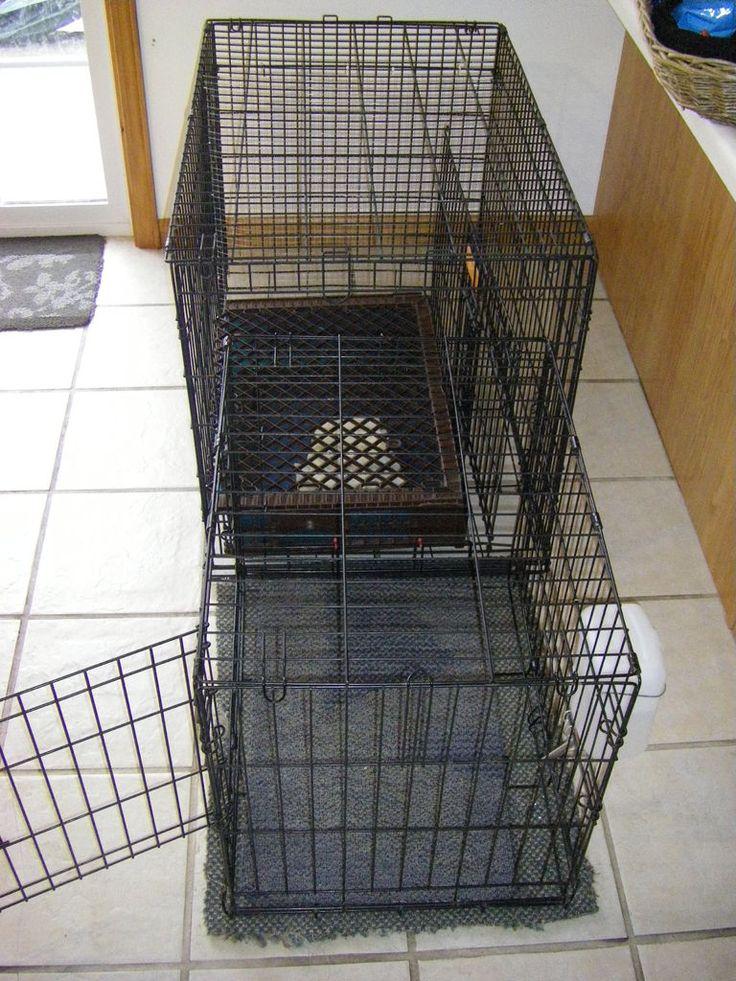 95 Best Dog Kennels Images On Pinterest Dog Kennels Dog