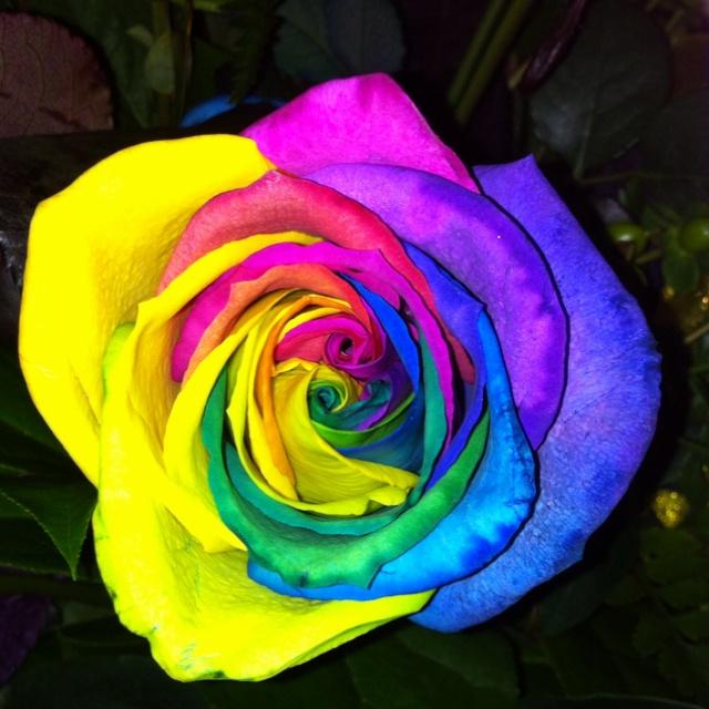 64 best tie dye images on pinterest tye dye for Rainbow dyed roses