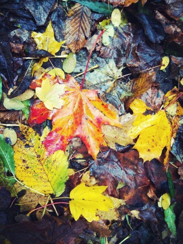 Jeseň:)