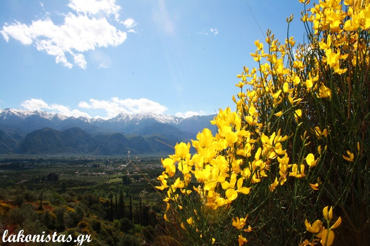 Sparta [wild flowers], Sparta [the city] and Mount Taygetos