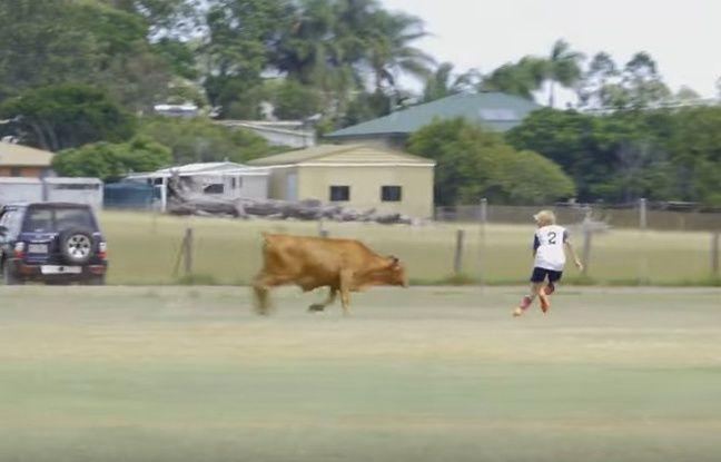 L'intrusion aurait pu faire des dégâts : un taureau errant est entré sur un terrain de football où jouaient des enfants, ce vendredi en Australie. L'homme qui a filmé la scène regardait son neveu jouer quand il a vu l'animal arriver sur le terrain : « En me tournant, j'ai remarqué le jeune taureau qui se tenait à environ 5 mètres de nous, a-t-il raconté à Metro.