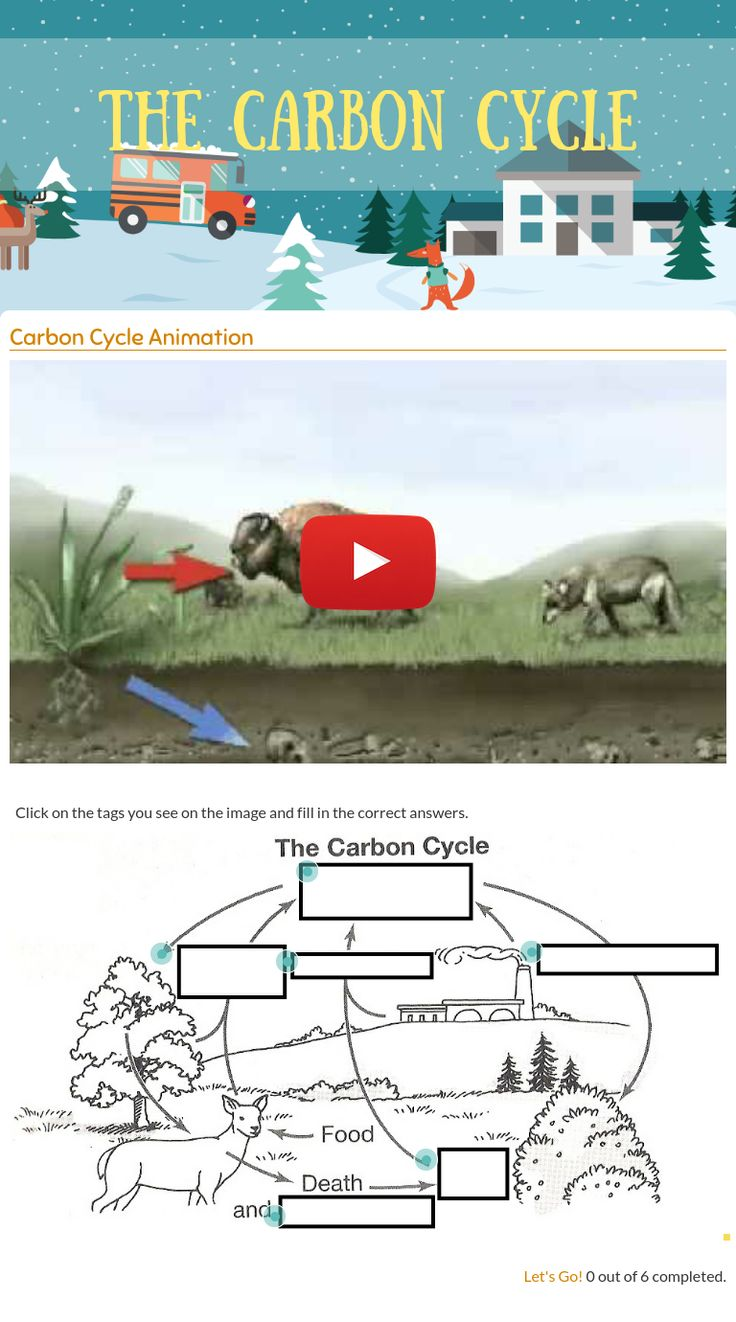 "Wizer.Me​ blended worksheet ""The Carbon Cycle""."