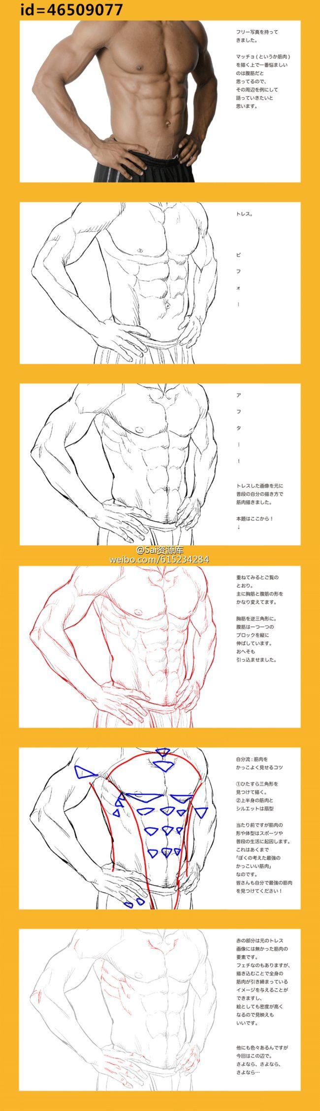 111 best Torso anatomy images on Pinterest | Human anatomy, Human ...