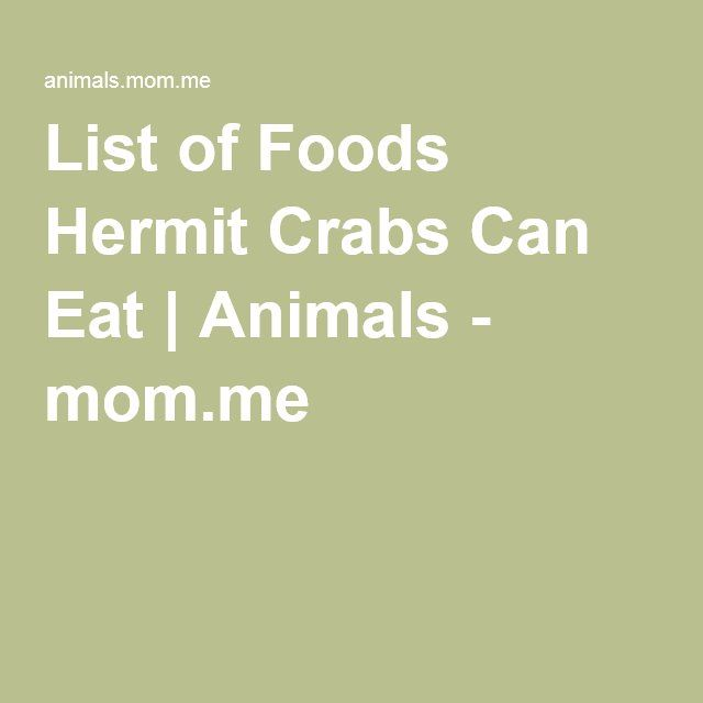 What Foods Can Hermit Crabs Eat