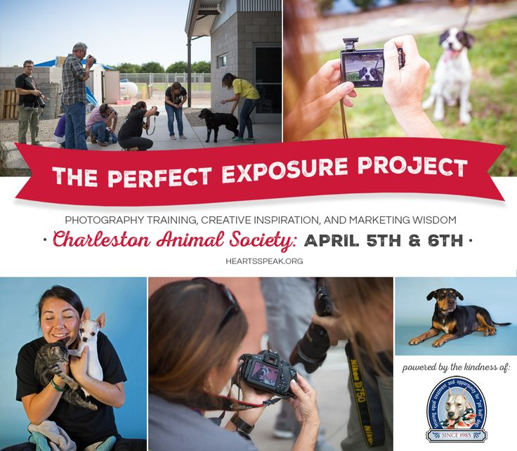We had such a blast bringing professional camera equipment, studio lighting, and creative inspiration to the Charleston Animal Society team via our Perfect Exposure Project!
