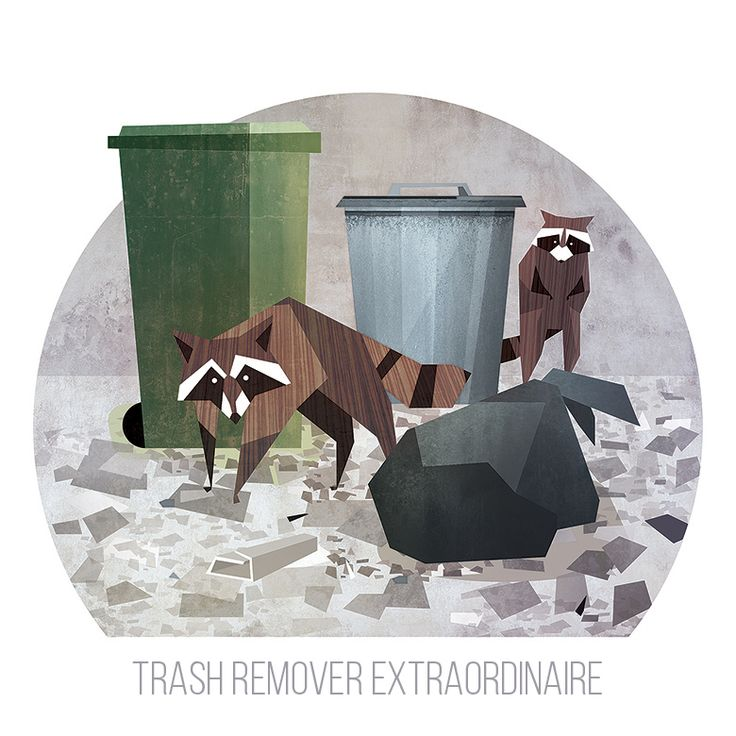 Illustration for a unpublished children's book. Raccoons, are they a menace?