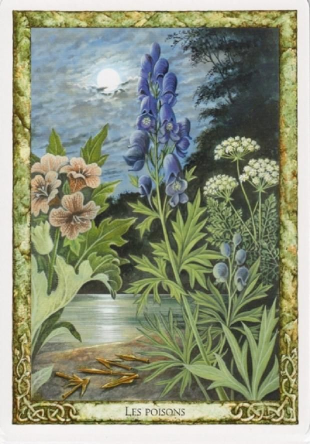 Best The Poisoned Garden Images On Pinterest Poisonous - Where does wolfsbane grow in the us map