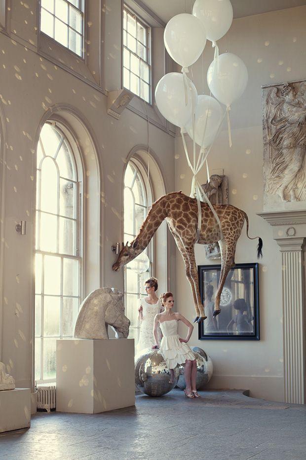 Definitely getting a floating giraffe for our wedding decorations.