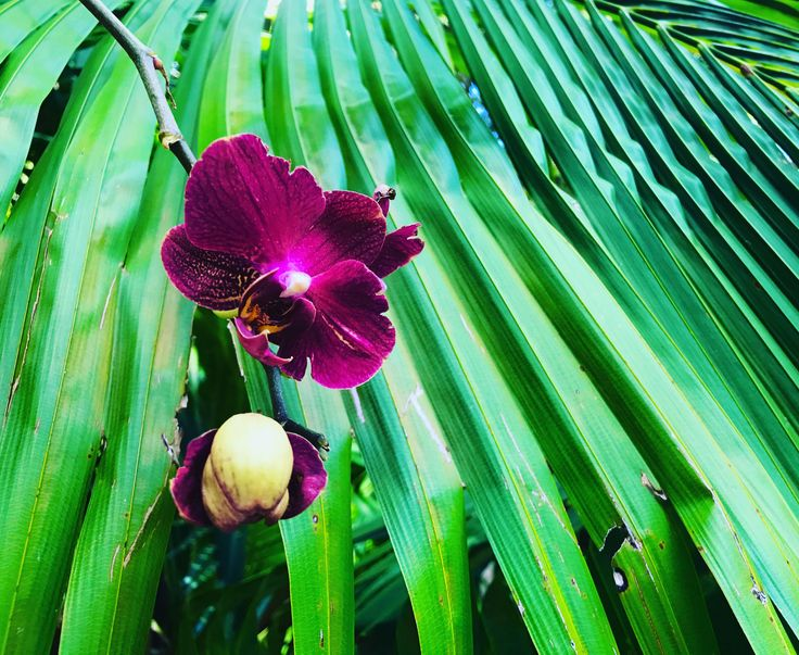 Our orchids flowering amongst the palm trees at ikatan Spa