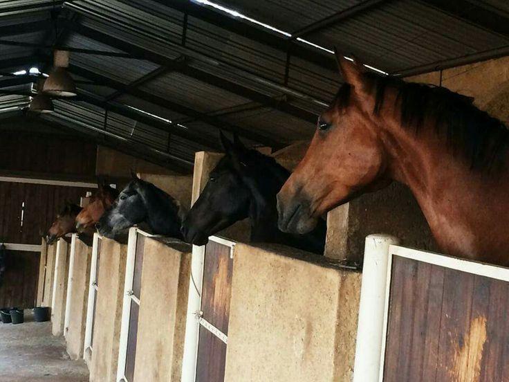 All the pretty horsrs @ Monte De Dios equestrian and wedding venue