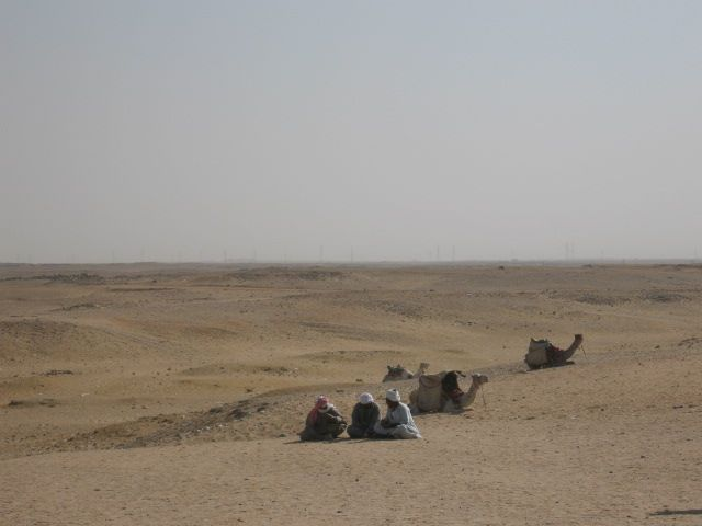 Camels in the desert by Giza. Photo: David Yustin