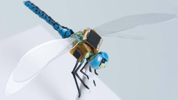 Scientists are turning dragonflies into tiny cyborg drones Read more Technology News Here --> http://digitaltechnologynews.com  One company has decided the ideal tiny drone should take its cues from the natural world of insects  specifically the dragonfly.   When Draper an independent biomedical solutions lab set out to make its own mini-fliers it cut out the middleman. It got some of the insects and outfitted them with cutting-edge navigation synthetic biology and neurotechnology systems to…