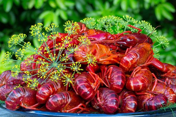 How to Prepare a Kräftskiva, Swedish Crayfish Party