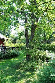 Kråks stuga - Inredning, trend, trädgård & torparliv.: Jag kan andas igen. Solen har brutit igenom.
