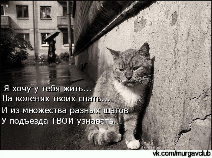 картинки с плачущим котом говорить слово нет предпраздничной суете