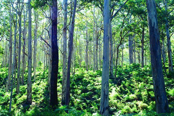 Forest near Margaret River, Australia