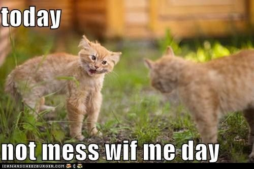 lol: Funny Kitty, Grumpy Kitty, Funny Pictures, Animal Photo, Funny Cat, Mondays Mornings, Cant Stop Laughing, Funny Stuff, Mess Wif