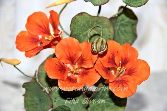 {Sensational paprika-orange Nasturtiums by PETUNYALARIM}