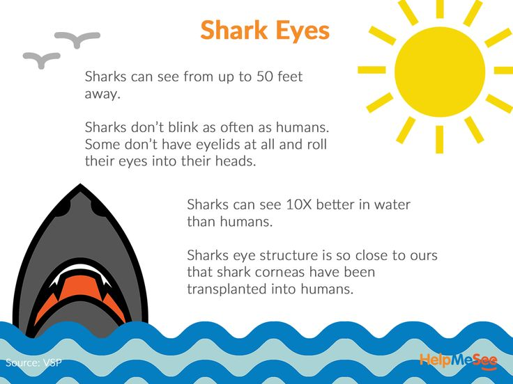 We've all heard that sharks can smell blood in the water, but their eyes are also quite advanced. Did you know that, the great white has an eye structure almost identical to humans?  Source: Smithsonian Magazine