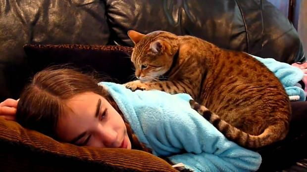 Поведение кошки расскажет о негативной энергии в доме - Досуг - Животные на Joinfo.ua