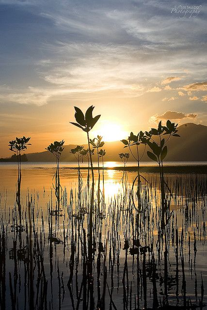 Triboa Mangrove Park, Subic Bay, Philippines by Lee Tallod
