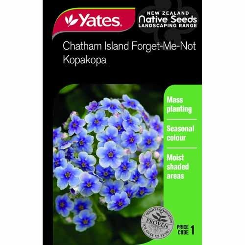 Seed Forget Me Not Chatham Island Native