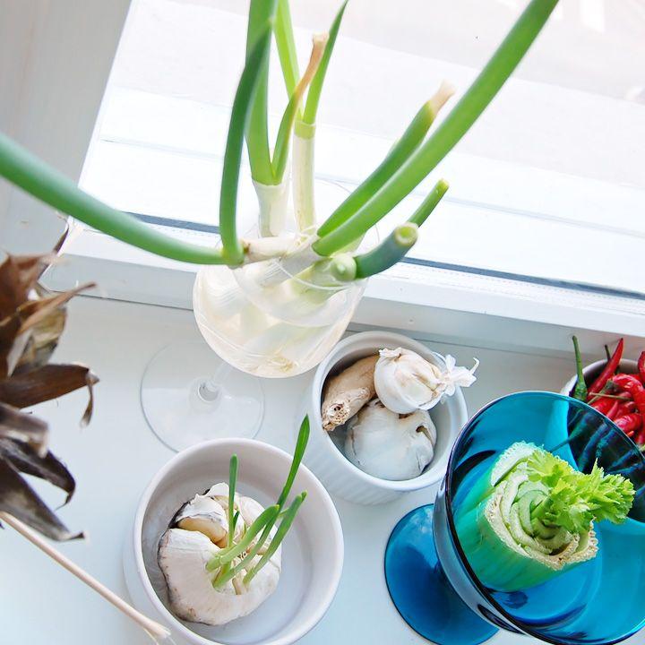 Du trenger ikke en hageflekk for å lage kjøkkenhage. Disse tre grønnsakene kan du re-dyrke i vinduskarmen din og gro «for alltid»!