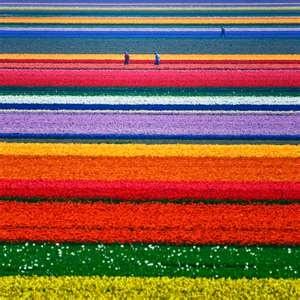 Holland♥