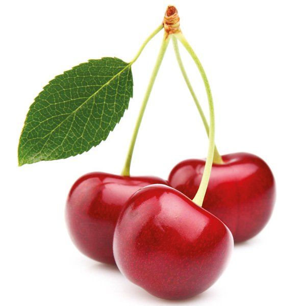 Wiśnia - Prunus cerasus 'Lucyna'