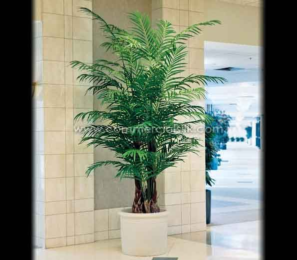 Areca Palm Tree Tranquility Simplicity And